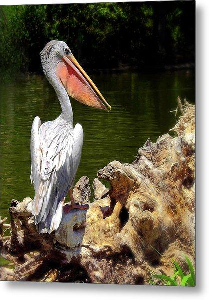 Pelican Proud #2 Metal Print by Wayne Wood
