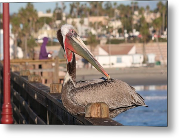 Pelican Sitting On Pier  Metal Print