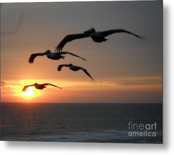 Metal Print featuring the photograph Pelican Sun Up by Laurie Lundquist