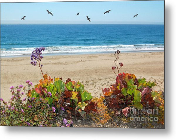 Pelicans And Flowers On Pismo Beach Metal Print