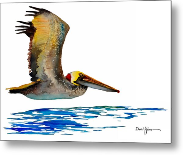 Da137 Pelican Over Water By Daniel Adams Metal Print