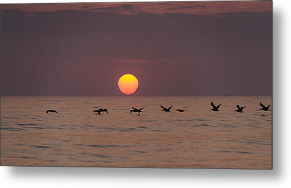 Pelicans In A Row Metal Print by  Island Sunrise and Sunsets Pieter Jordaan