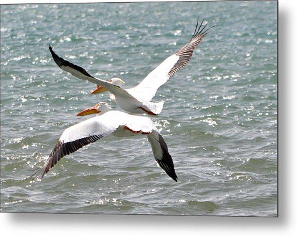 Pelicans In Sync Metal Print