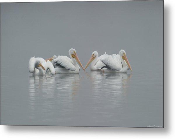 Pelicans In The Mist Metal Print