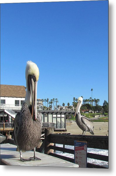 Pelicans On Pier Metal Print