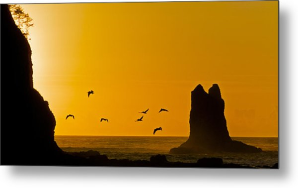Pelicans On The Wing II Metal Print