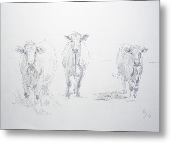 Pencil Drawing Of Three Cows Metal Print