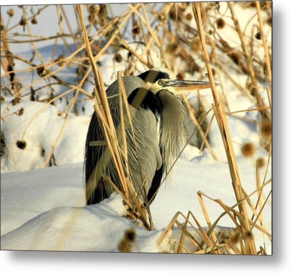Penguin Heron  Metal Print