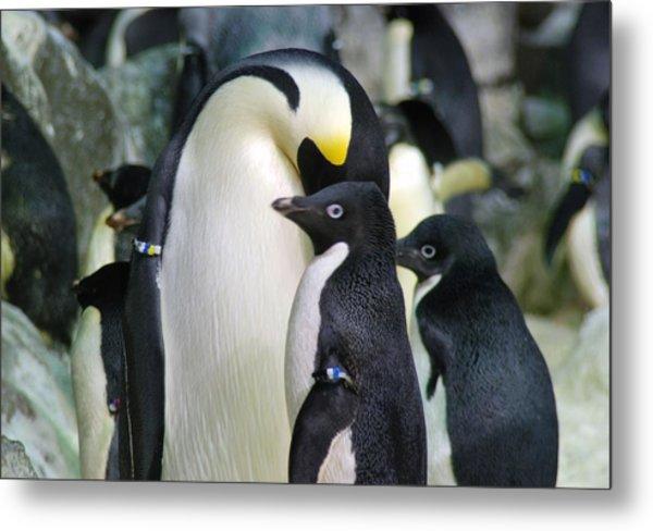 Penguins Metal Print by Pamela Schreckengost