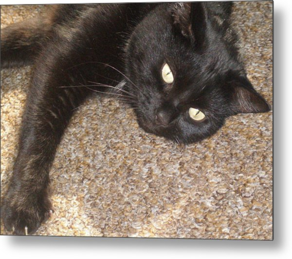 Pepsi Black Cat Found The Hot Spot Metal Print