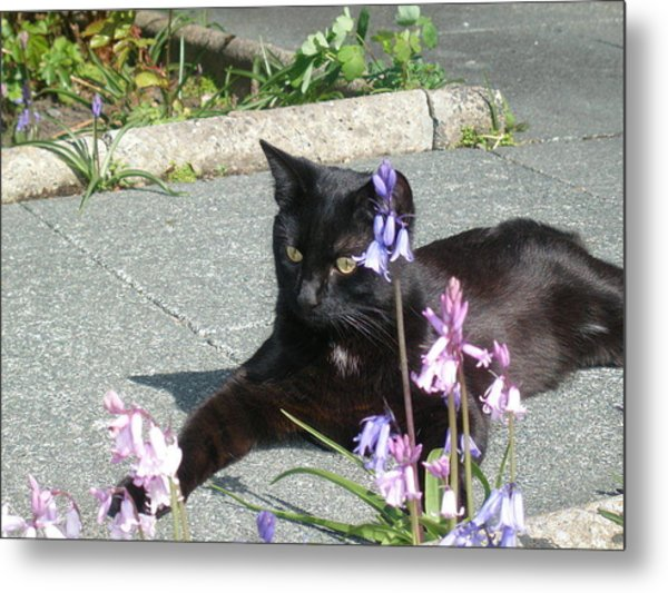 Pepsi In The Garden Metal Print