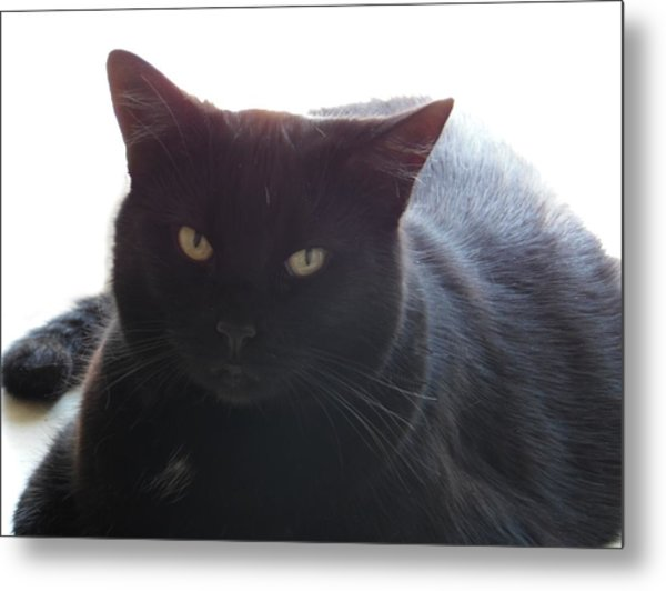 Pepsi The Lucky Black Cat Metal Print