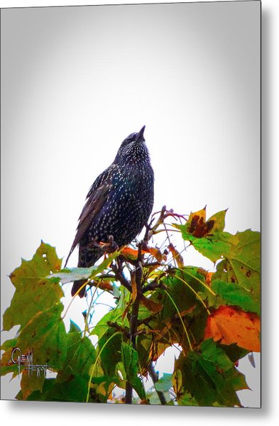 Perched Aloft Metal Print
