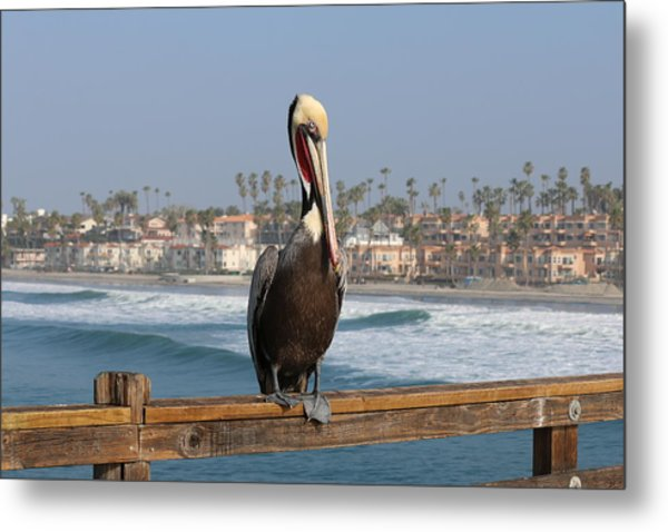 Perched On The Pier Metal Print