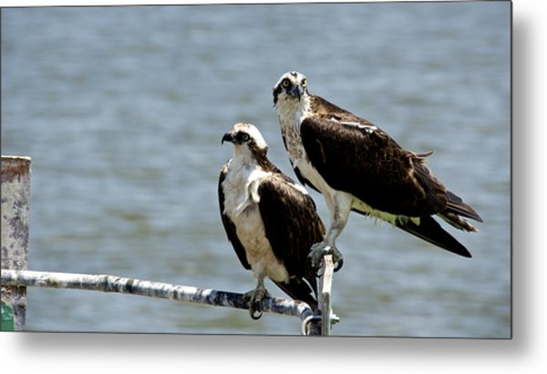 Perched On The River Metal Print by Kathi Isserman