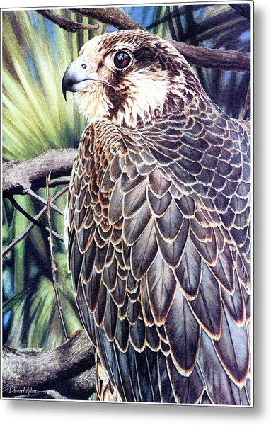 Da138 Peregrine Falcon By Daniel Adams Metal Print