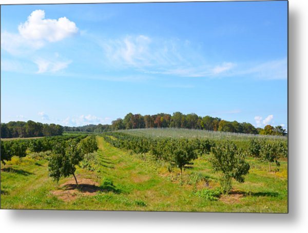 Perfect Fall Day On Alstede Farm Metal Print