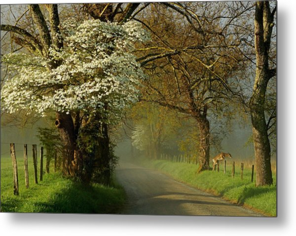 A Perfect Morning Metal Print by Deb Campbell