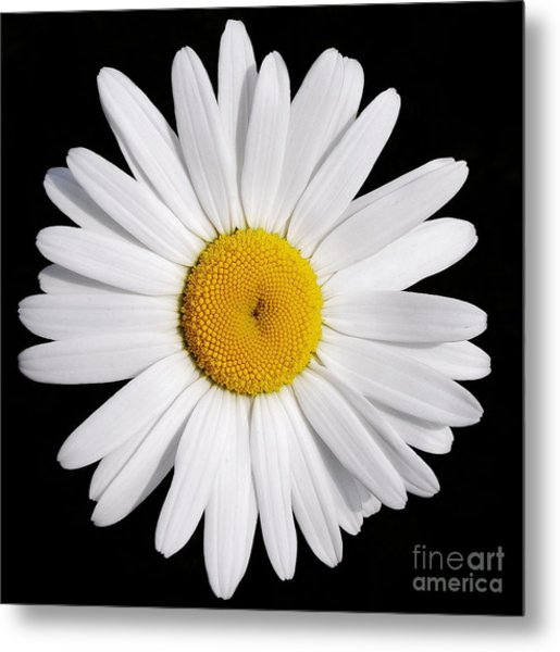 Perfectly Daisy Metal Print