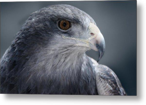 Peruvian Eagle Metal Print by Walter Iglesias