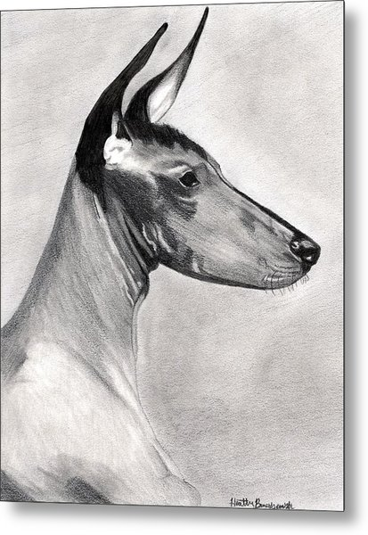 Peruvian Inca Orchid Dog Metal Print by Olde Time  Mercantile