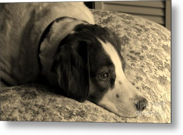 Pet Portrait-waiting For Mom Metal Print