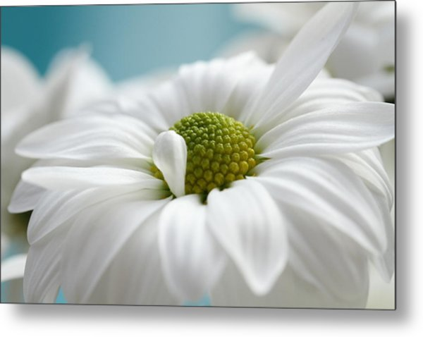 Petal Cloud Metal Print