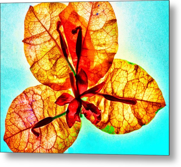 Petals On Blue Metal Print