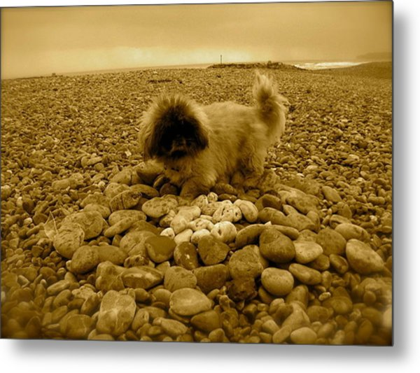 Pete With His Pebble Collection Metal Print by Samantha Wakefield
