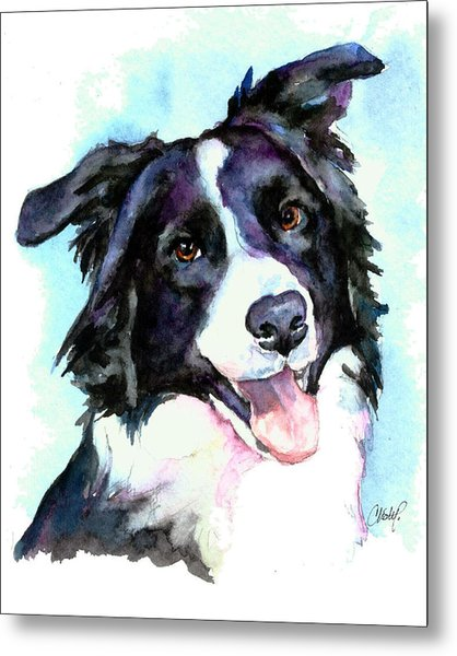 Petey Border Collie Metal Print