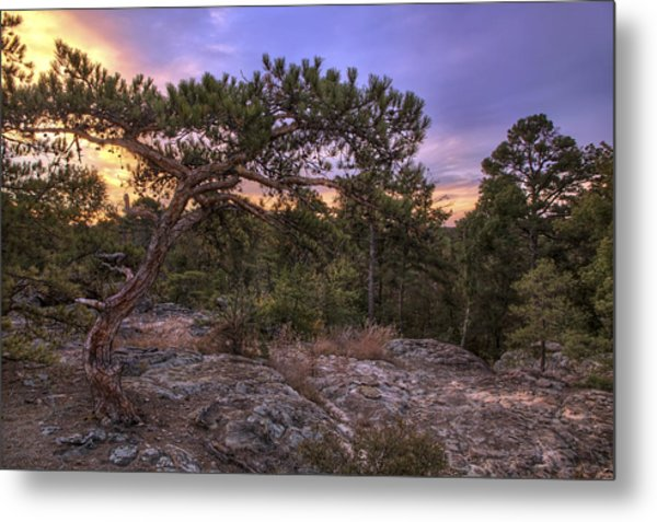 Petit Jean Mountain Bonsai Tree - Arkansas Metal Print
