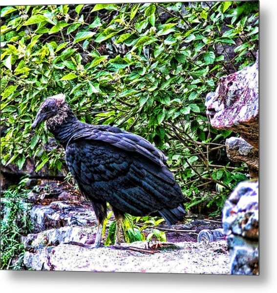 Petitjean Vulture Metal Print by Joe Bledsoe