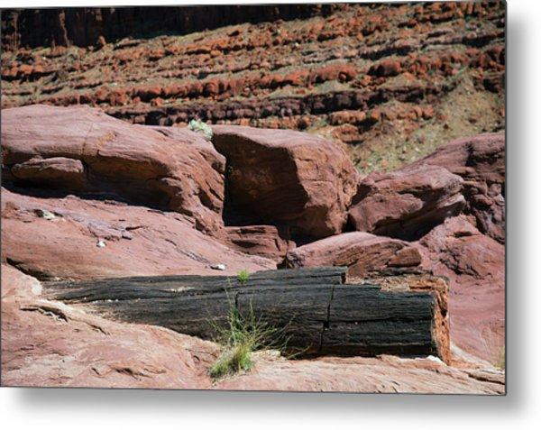 Petrified Log And Sandstone Metal Print