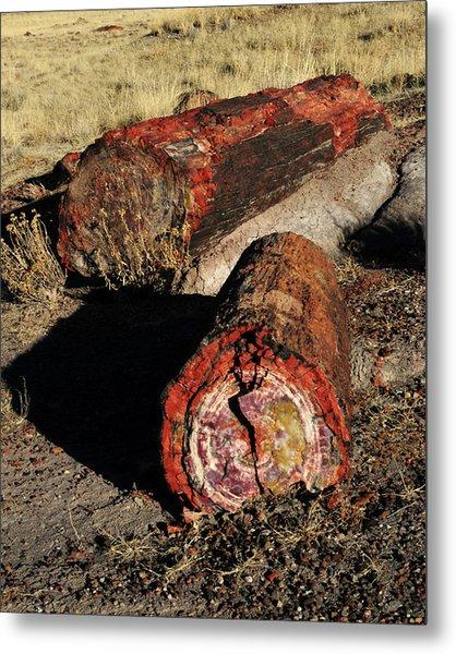 Petrified Logs, Petrified National Metal Print