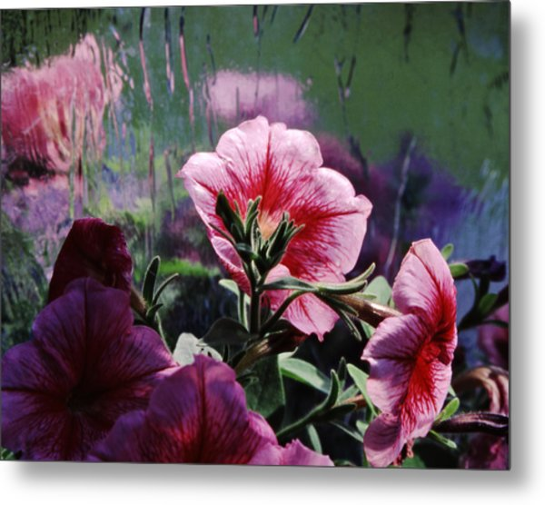 Petunia Reflection Metal Print