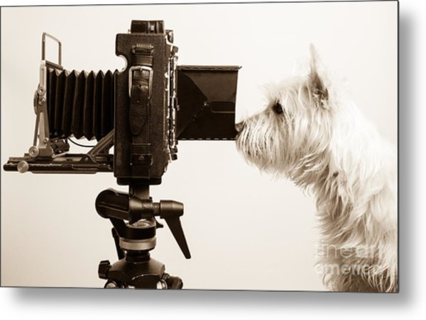 Metal Print featuring the photograph Pho Dog Grapher by Edward Fielding