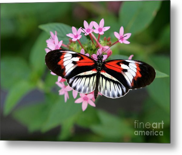 Piano Key Butterfly On Pink Penta Metal Print