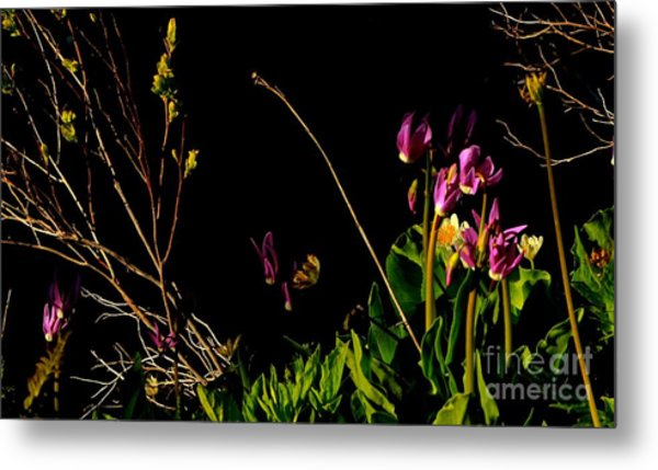 Picture Art Metal Print by Tim Rice