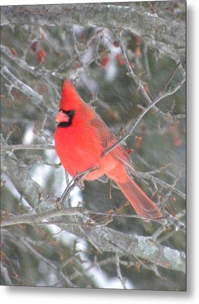 Picture Perfect Cardinal Metal Print