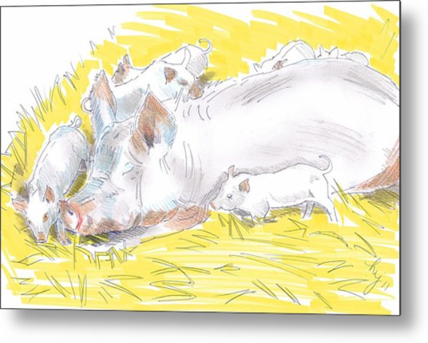 Pig Sow And Piglets Metal Print