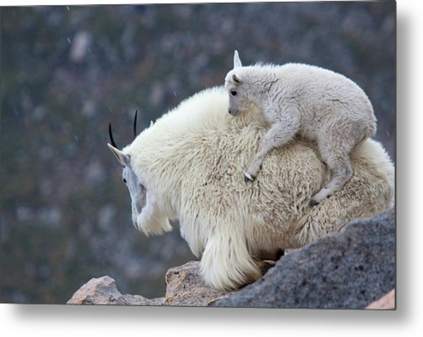 Piggyback Ride Metal Print