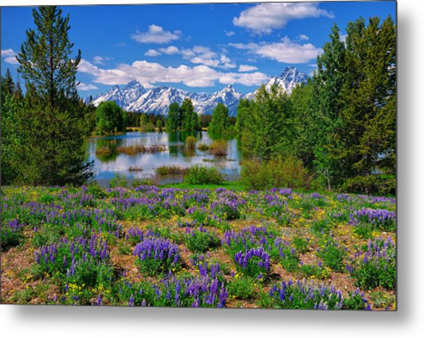 Pilgrim Creek Wildflowers Metal Print