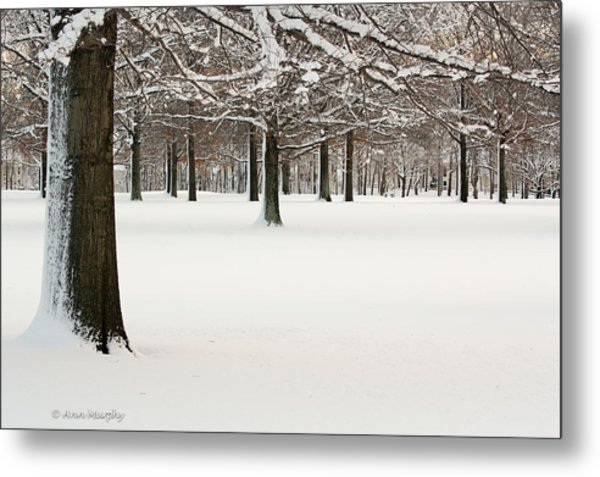 Pin Oaks Covered In Snow Metal Print