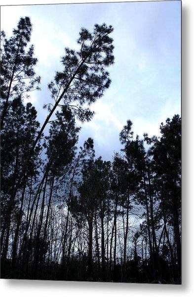 Pin Tree Sunset Metal Print by Michel Mata