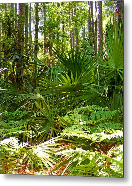 Pine And Palmetto Woods Filtered Metal Print
