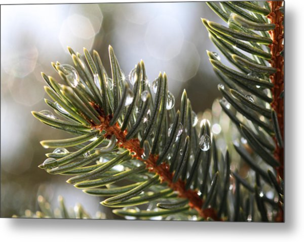 Pine Bough Dewdrops Metal Print