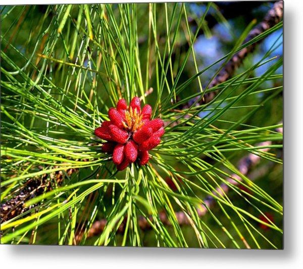 Pine Bud Metal Print