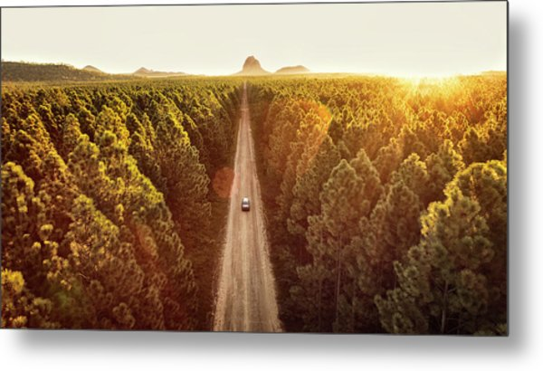 Pine Forest Metal Print by Flyfilm.tv