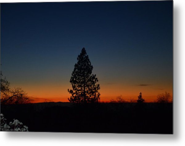 Pine In The Prism Metal Print