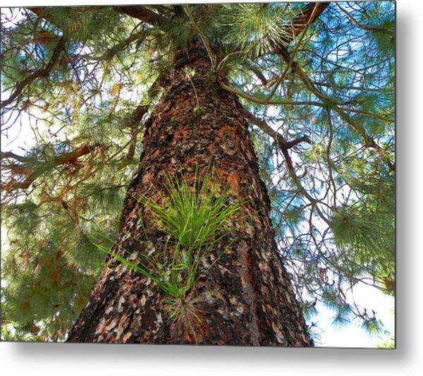 Pine Tree Tower Metal Print